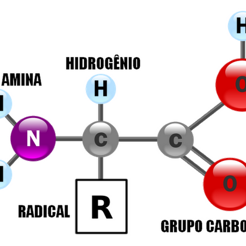 Aminoácidos Aa Biomedicina Padrão