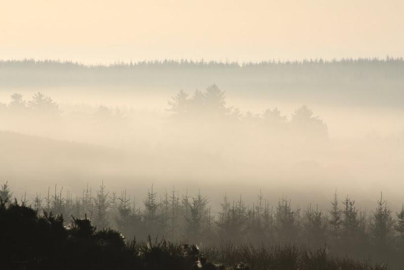 Morning Autumn fog in Clare-Alex Degraaf.JPG