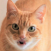 françois rousse
