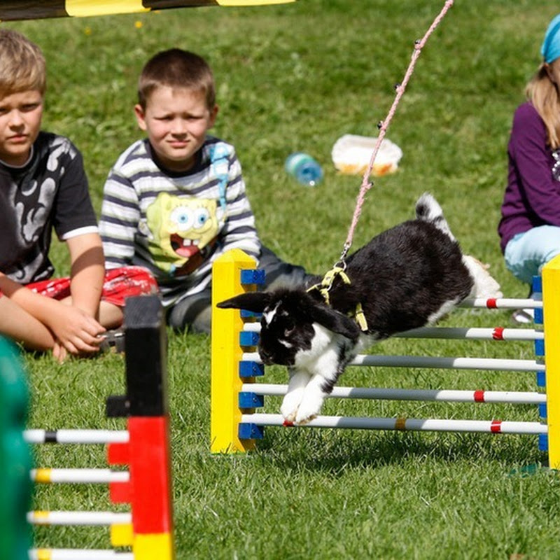Rommerz Rabbit Hopping Competition in Germany