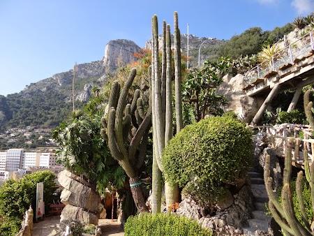 10. Jardin Exotique - Monaco.JPG