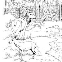 animaatjes-dierentuin-76644.jpg