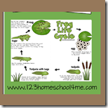 Frog Lifecycle Chart and Notebook for Homeschool Science