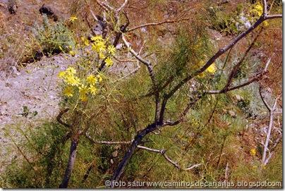 1259 Artenara-Acusa(Balillo alpispillo