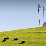 gibbs-farm-dawson_02.jpg