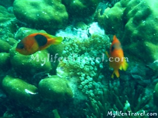 Koh Lipe Diving 52