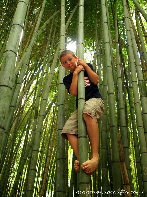 bamboo forest in Cherokee, NC