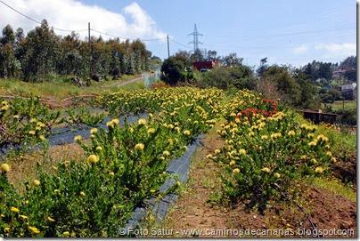 7747 La Laguna-Barranco del Laurel(Proteas)