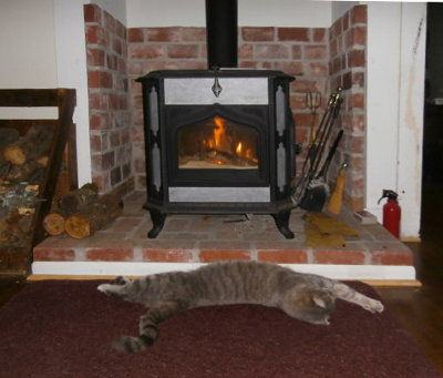 Riley sprawled in front of the wood heat stove, warming his belly.