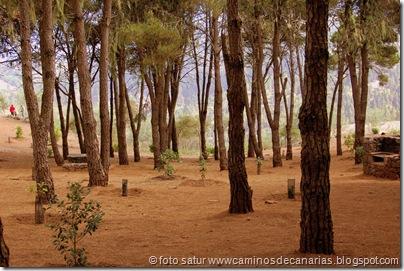 3011 C. de Tejeda-Lomo del Palo