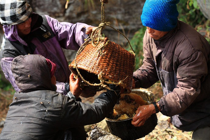 honey-hunters-nepal-31