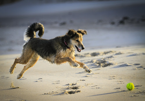 Got to Get the Ball by Eugene Ball - Animals - Dogs Playing ( playing, canine, ball, jumping, beach, dog, mutt )