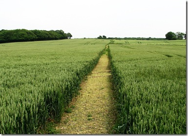 20120614 Wheat footpath, Shirley Moor