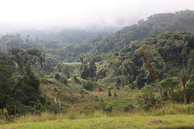 South Brazil 008.jpg