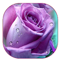 Purple Rose Live Wallpaper icon