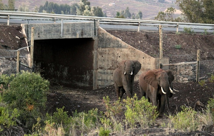 wildlife-crossings-8