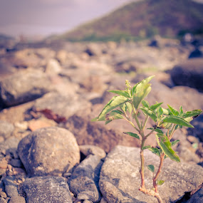 Life and Rocks by Adit Lal - Nature Up Close Rock & Stone ( water, plant, life, green, rocks )