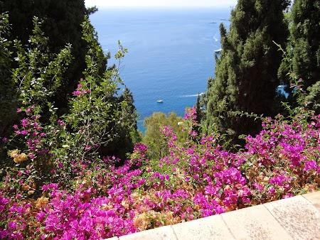 16. Flori de Sicilia.JPG