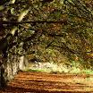 Autumn Canopy-Ciaran Cooney.JPG