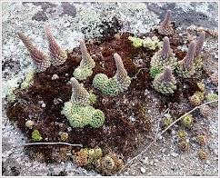 Растительность. Алтай. Фото В.Лобанова. www.timeteka.ru