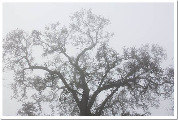 111220_fog_oak_filigree