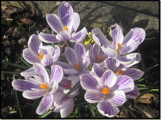 In our garden - 1/3/12