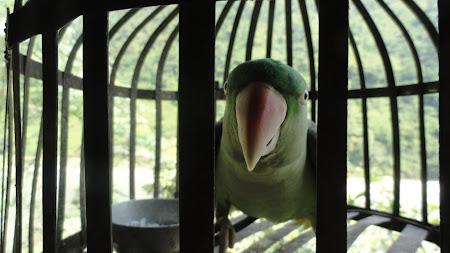 Papagalul haios.JPG