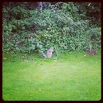 , Saturday, cats and squirrels