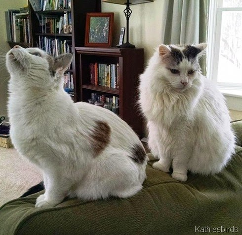 11. the cats want to know 2-14-15