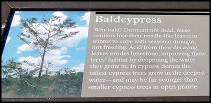22a1a - Bald Cypress Sign