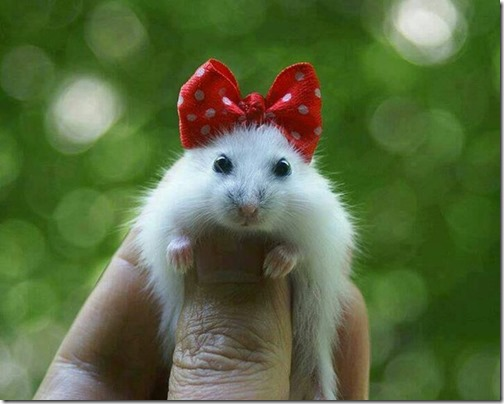 hamster grande imagen (13)