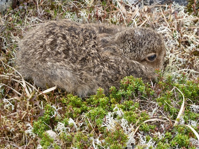 PHIL'S PIC, LEVERET