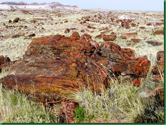 Painted Desert & Petrified Forest 379