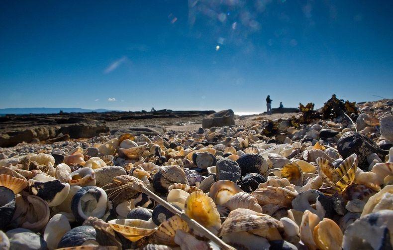 shell-beach-australia-2