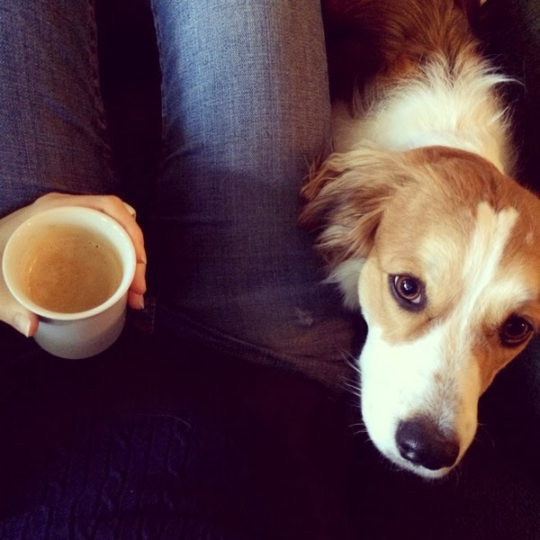 dog and nespresso coffee
