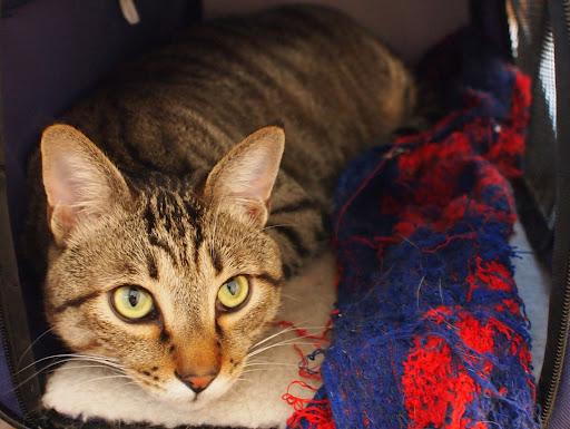 [写真]お気に入りのタオルと猫小屋で