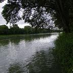 Vieux Rhône à Irigny en  aval réserve de Pierre-Bénite photo #1143