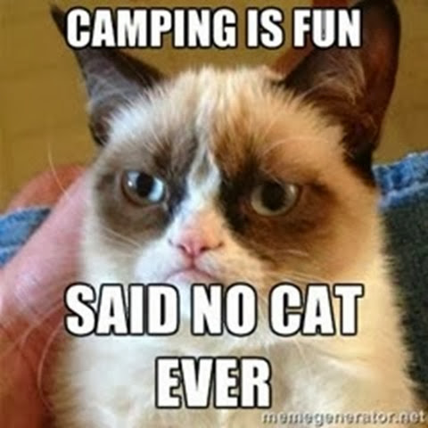grumpy cat goes camping