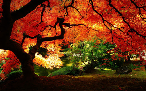 Beautiful Autumn Red Leaves