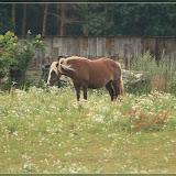 Pferd ;)