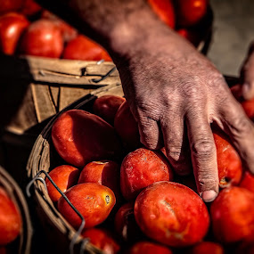 Hands at work by Flavio Mini - Food & Drink Fruits & Vegetables ( red, hands, basket, fruits and vegetables, tomatoes,  )