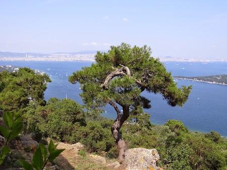 32. Vegetatie mediteraneeana.JPG