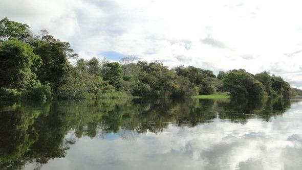 Reserva Mamirauá