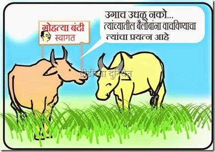 cartoon on cow slaughter ban in Maharashtra