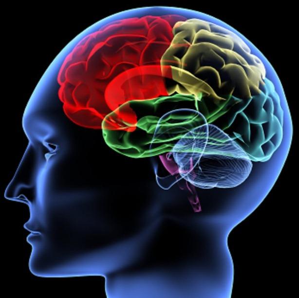 Cerebro materia gris