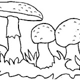normal_coloriage_maison_champignon_35.jpg
