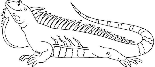 Iguanas Dibujos Para Colorear
