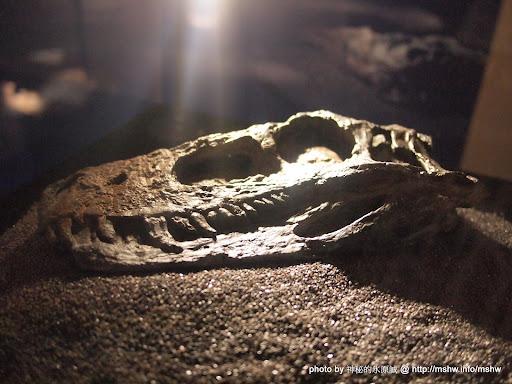 【景點】地球上最古老的恐龍展@台北中正紀念堂 : 恐龍這東西還真複雜阿 中正區 區域 博物館 台北市 嗜好 廣告 新聞與政治 旅行 會展 歷史 自然科學