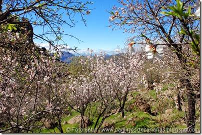7446 La Goleta-La Candelilla(Almendros en Flor)