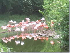 2008.05.26-017 flamants